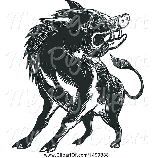 Swine Clipart of Sketched Angry Wild Boar