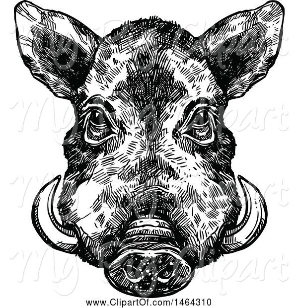 Swine Clipart of Sketched Black and White Boar
