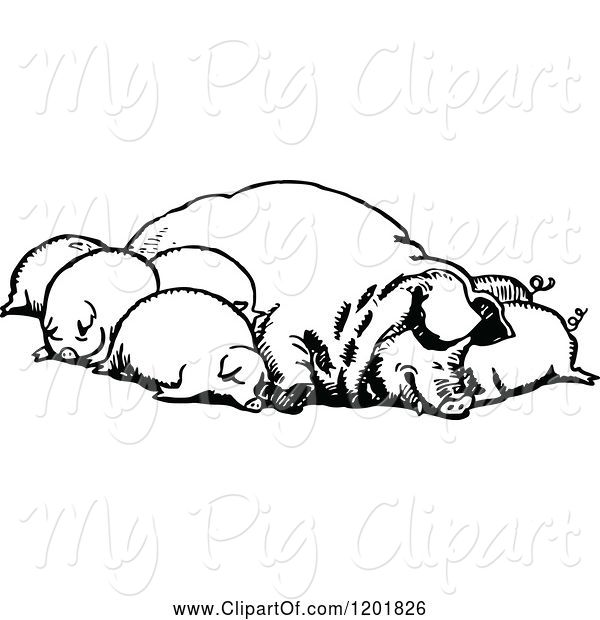 Swine Clipart of Vintage Black and White Group of Sleeping Pigs