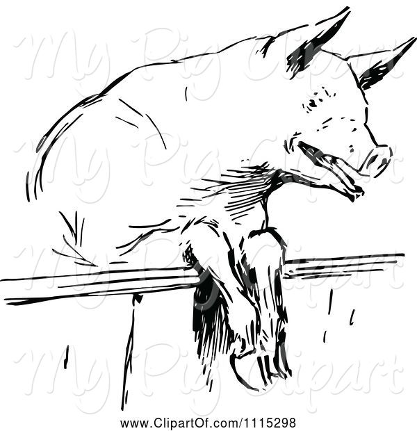 Swine Clipart of Vintage Black and White Pig Looking over a Fence